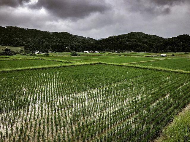 Kanazawa. Pre-rain. ————————————————————— This place continues to amaze me. ———————————————— Kanazawa, Ishikawa, Japan ———————————————— www.bradpatocka.com ———————————————— #Japan #Kanazawa #fog #film #onassignment #work  #rural #farms #ricepaddys #nature #landscape #cloud  #weather #rainyseason #westjapan #documentary #exlpore #travel