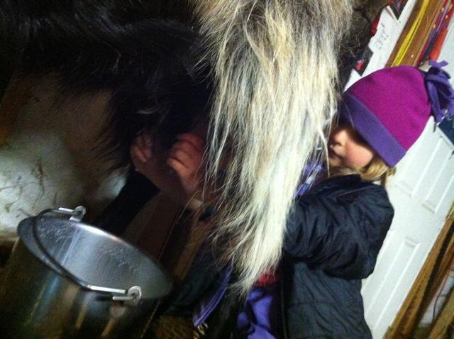milking Sygny