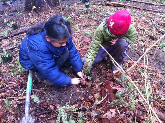 partner planting