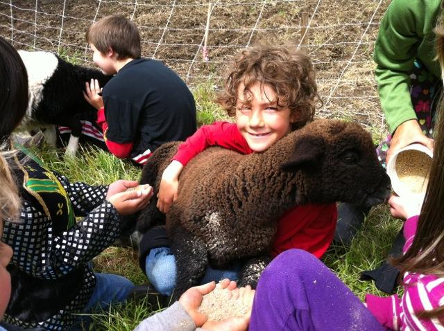 lovin' lambs