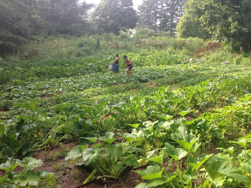 farming in eden.JPG