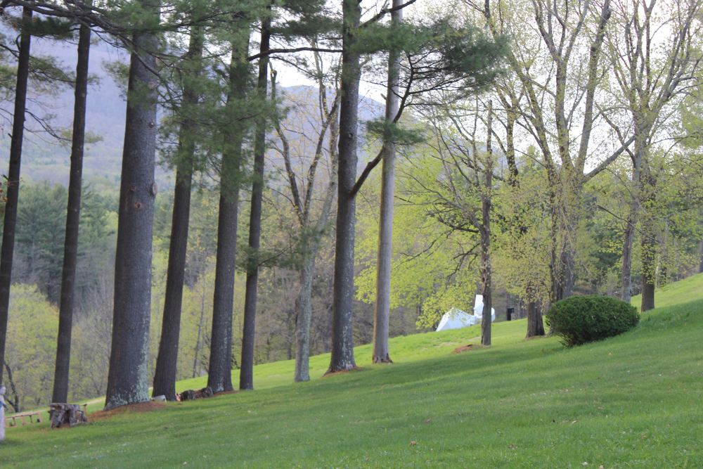 lawn gorgeous spring.jpg
