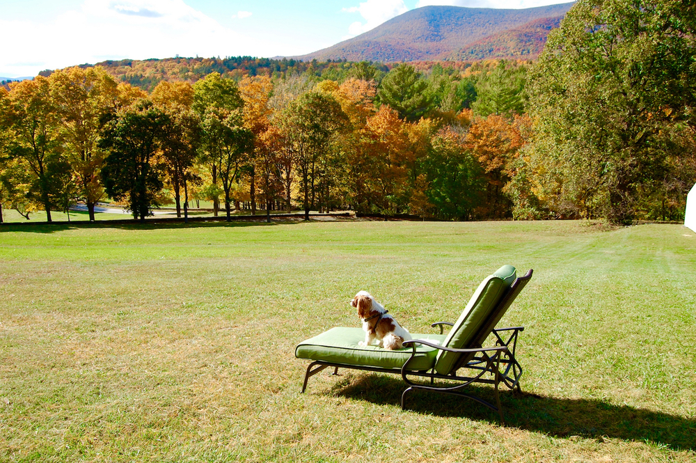 Fall view Jetson Chaise.jpg