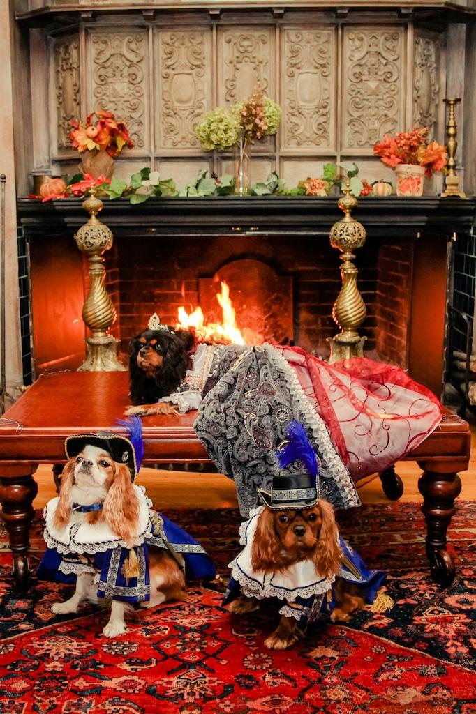 Marie Antoinette Cavalier Wilburton Inn Howloween 2016.jpg
