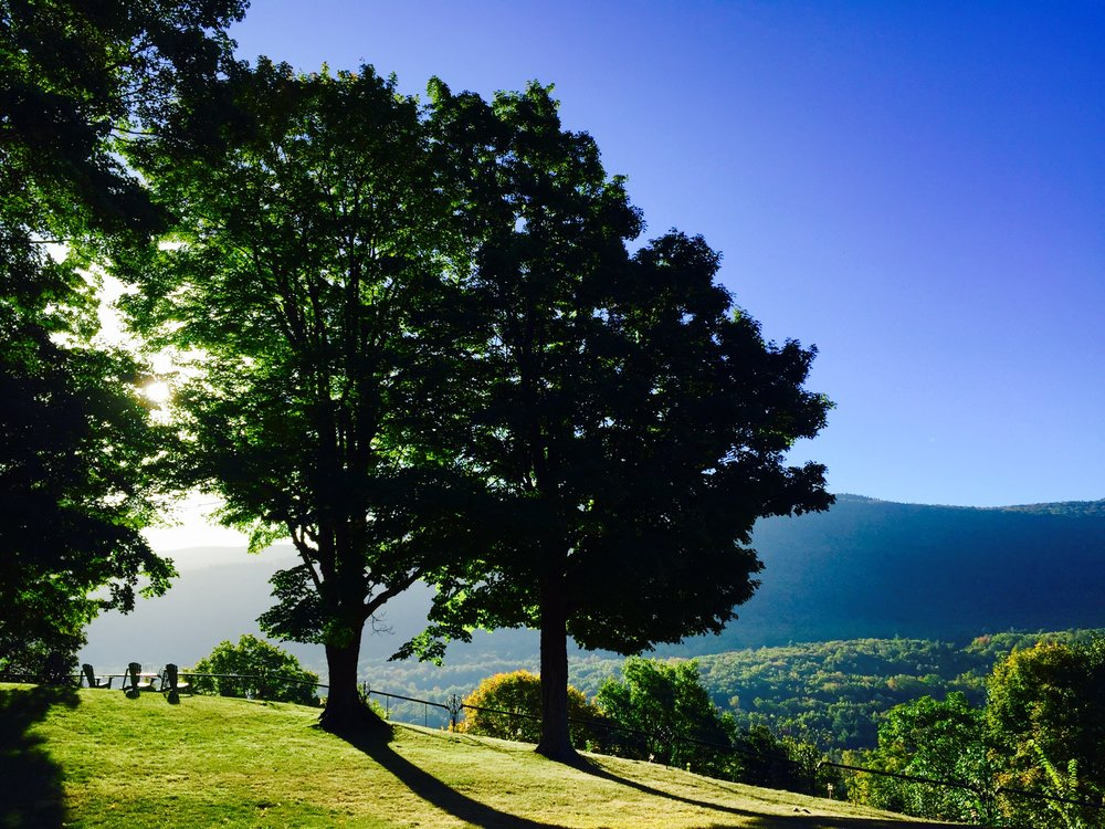 summer trees morning.jpg