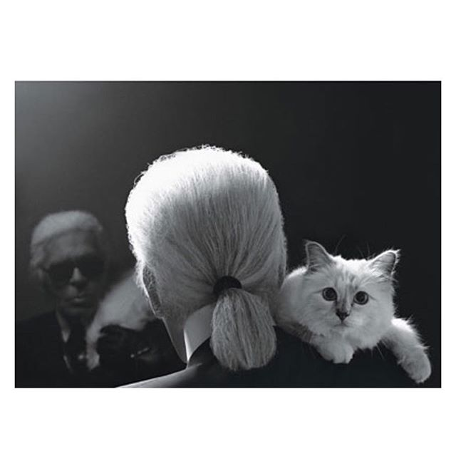 Karl 💔