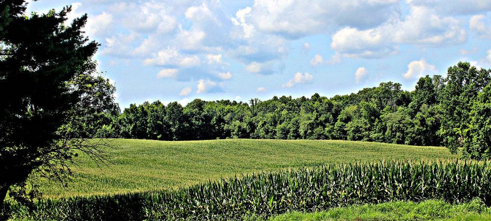 Farm Scene-2000px.jpg