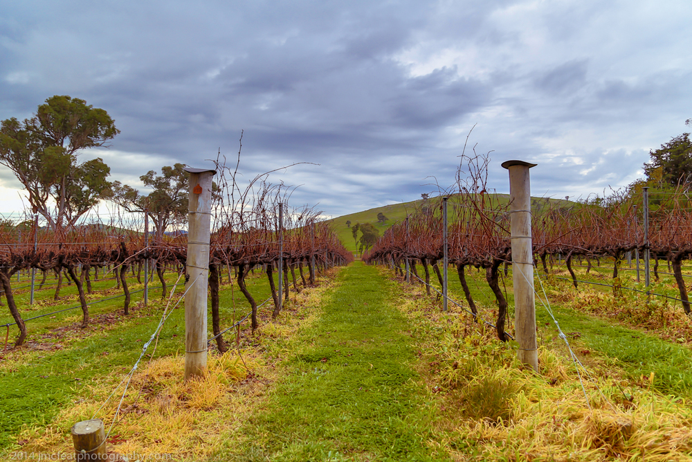 the vineyard post vintage, on the eve of winter | four winds vineyard, murrumbateman