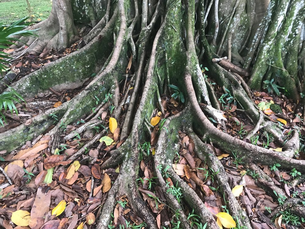 Extensive roots.