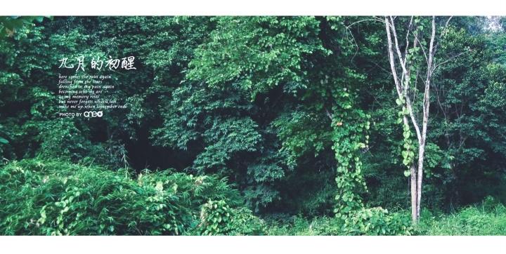 p_large_BV0k_12c70005d9215c44.jpg