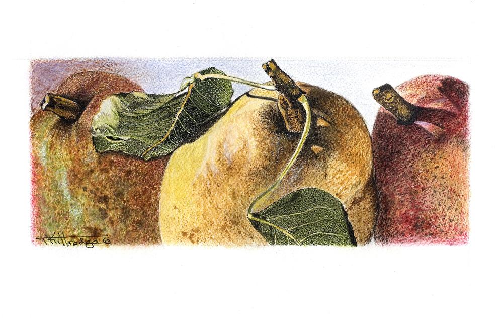 FruitPears.jpg
