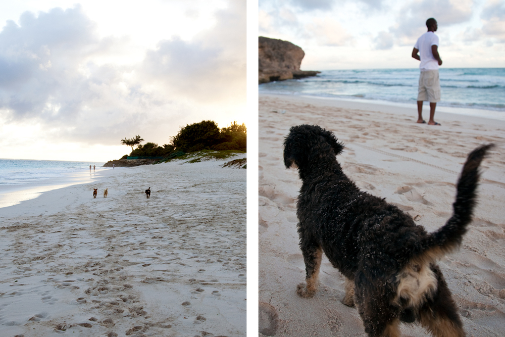 Beach Dogs // Christ Church, Barbados