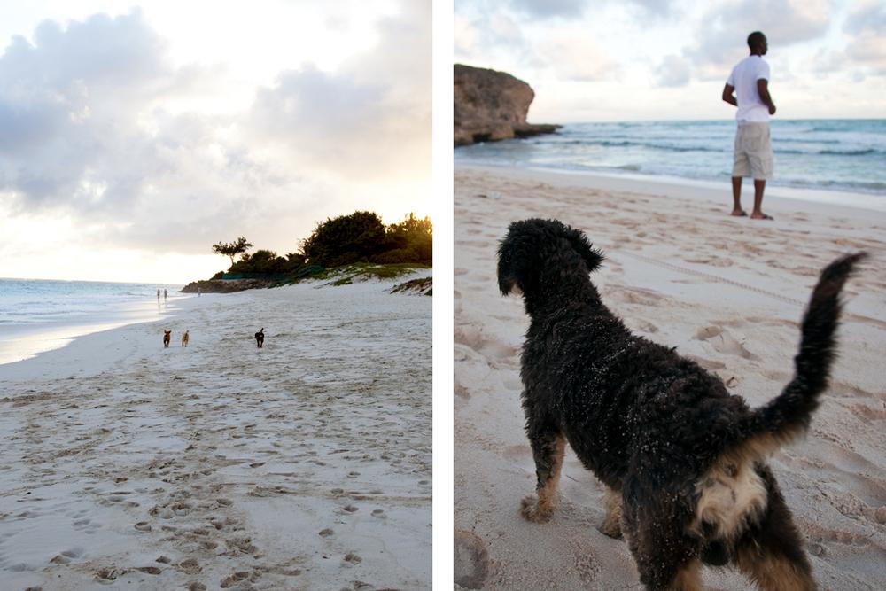 Beach Dogs // Christ Church, Barbados