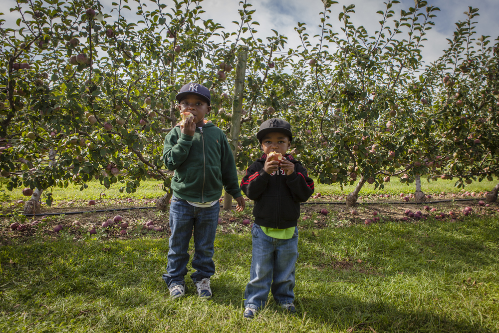 brothers apple picking, autumn 2013