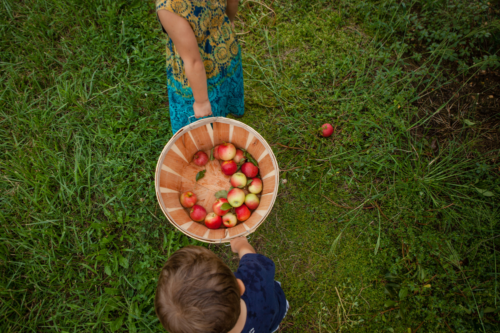 ApplePicking_sRGB-10.jpg