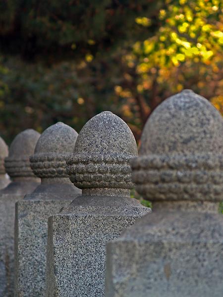 Ancient Acorns