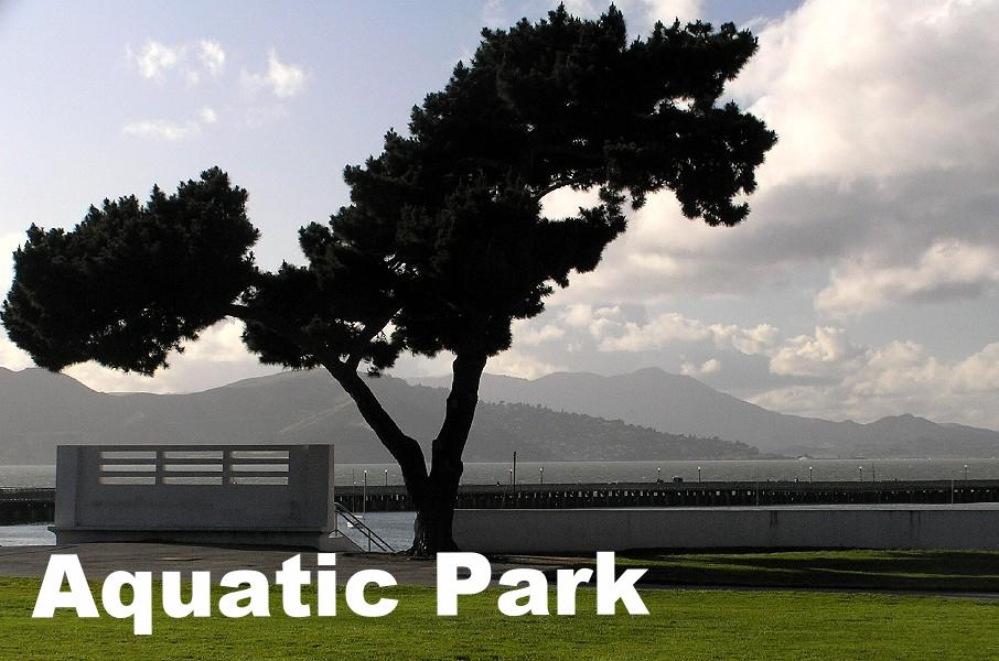Aquatic Silhouette.jpg