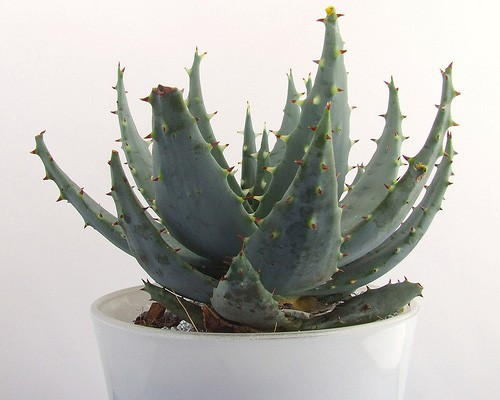 http://www.mnn.com/health/healthy-spaces/photos/15-houseplants-for-improving-indoor-air-quality/aloe-aloe-vera