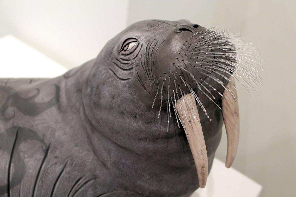 Walrus6.jpg