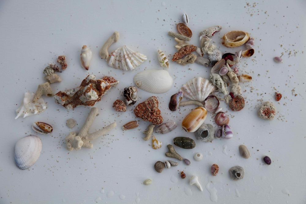 Shell collection162.jpeg