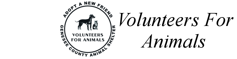 Volunteers For Animals