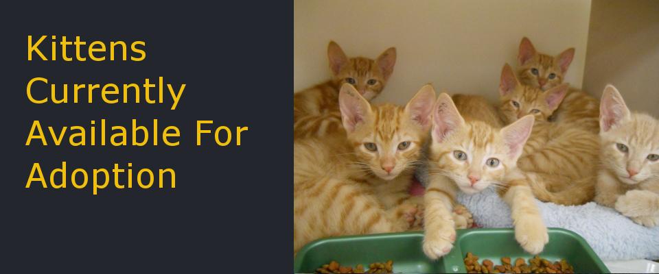 Kittens_Main.jpg