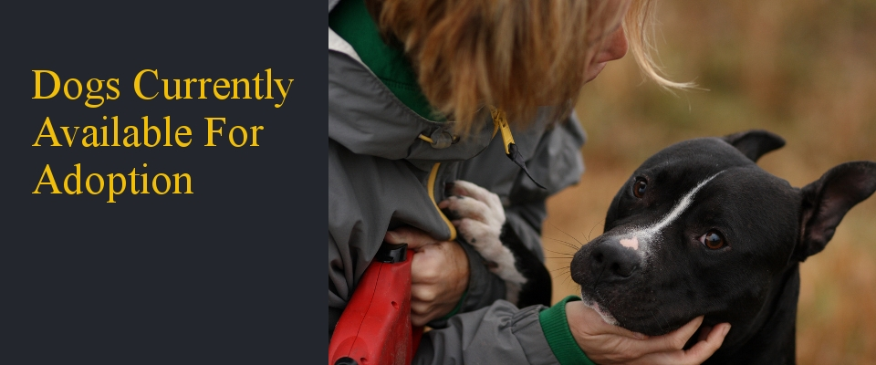 Dogs_Adoption.jpg