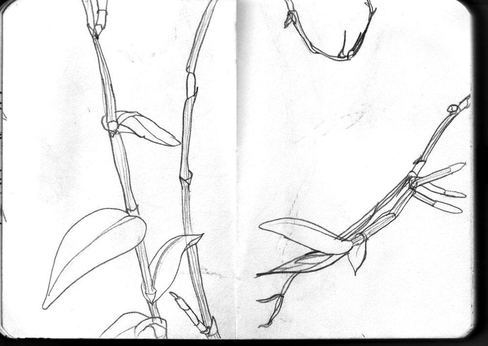 pflanze2.jpg