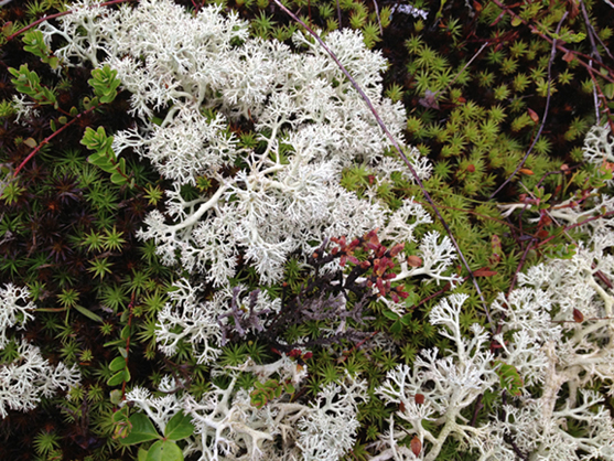 Looking down at the ground into the bog and lichen