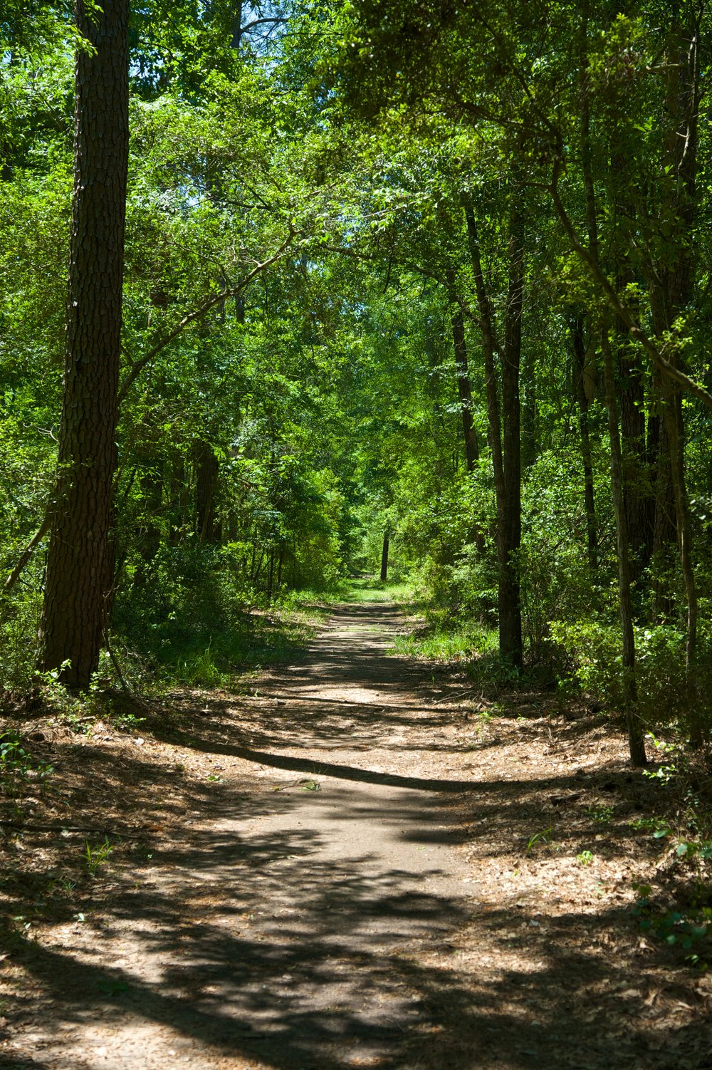 Lake Houston Wilderness Park trail.jpg