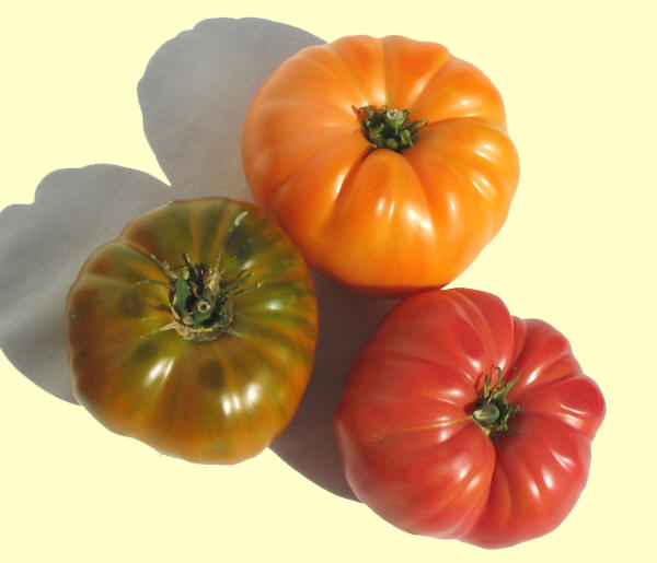 heirloomtomatoplants.com.jpg