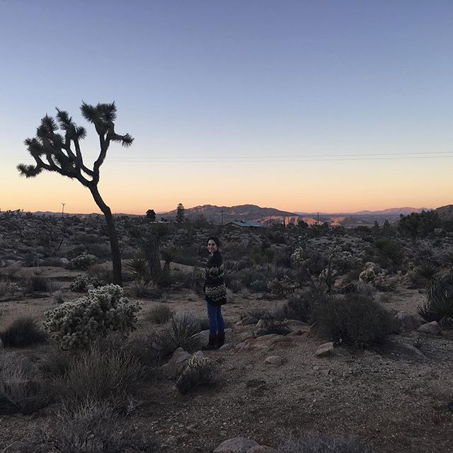 Joshua Tree as the sun begins to set