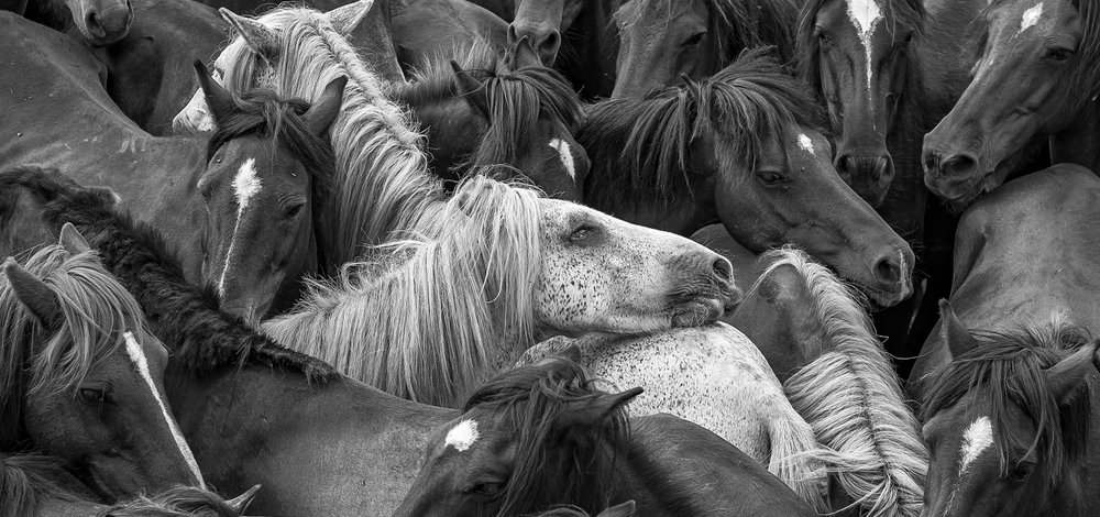 Horses-13.jpg