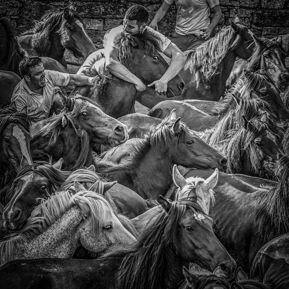 Horses-16.jpg
