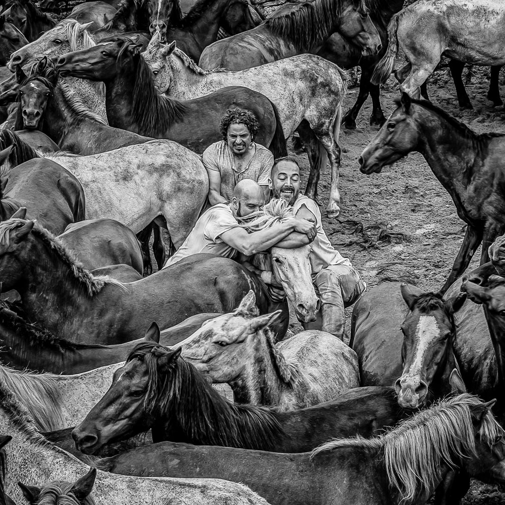 Horses-19.jpg