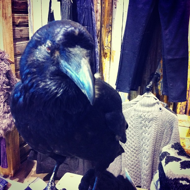 Odin's eyes are looking out for shoplifters #iceland #ravens #taxidermy (Taken with  Instagram  at Geysir)