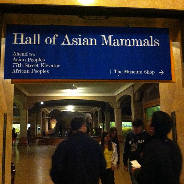#asian #mammal (Taken with  Instagram  at American Museum of Natural History)