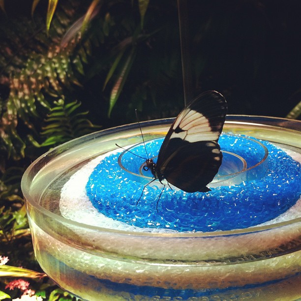 #butterflies (Taken with  instagram )