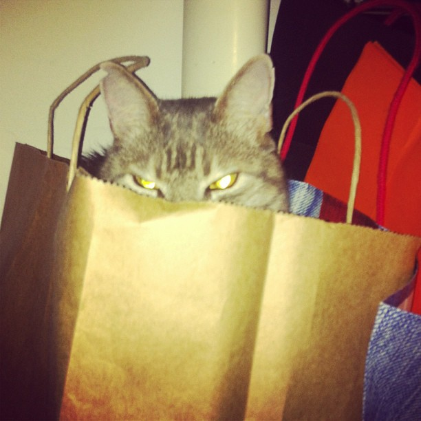 I'M BUSY  #cats #bags #catsinbags  (Taken with  instagram )