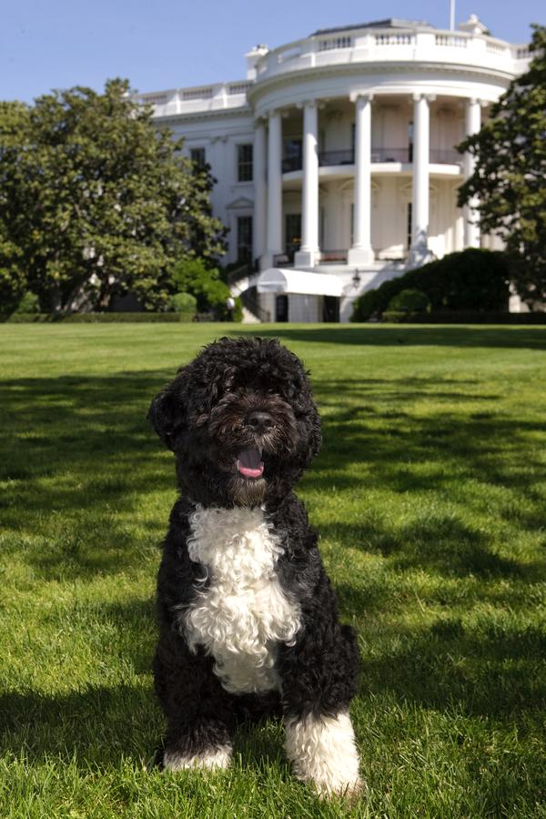 This is my President's dog.