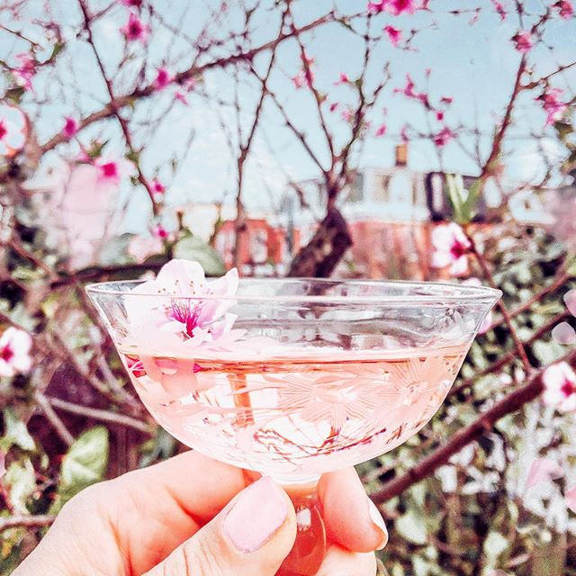 The world looks better through 𝓻𝓸𝓼é colored glasses. 😎🌸🥂✌🏻 ⠀⠀⠀⠀⠀⠀⠀⠀⠀ And Baltimore looks better covered in pink blossoms, am I right? Sorry not sorry you're going to be seeing a lot of flowers on my feed in the next coming weeks - I'm hunting down the best spots for Baltimore blooms and then I'm headed to the Netherlands in 2 weeks to check out the flower fields! I would love any tips if you have them 🌷🇳🇱 ⠀⠀⠀⠀⠀⠀⠀⠀⠀ And speaking of ROSÉ - are you a fan? Check out my stories for how I got this extra special custom blend for my photo. 😂 • • • • • • • #thebmorecreatives #baltimore #charmcity #bmoreart #bmoreblogger #hampdenbaltimore #baltimoreblogger #alliemarietravels #flowers #girlslovetravel #bmoresecretspots #girlsthatsparkle #femmetravel #visitbmore #thetravelwomen #ladiesgoneglobal #girldiscoverers #thefairytalebloggers #pinktrotters #sheisnotlost #discoverunder5k #urbanexploration #wanderlust #lifestyle #scenic #DoYouTravel #TravelWithMe