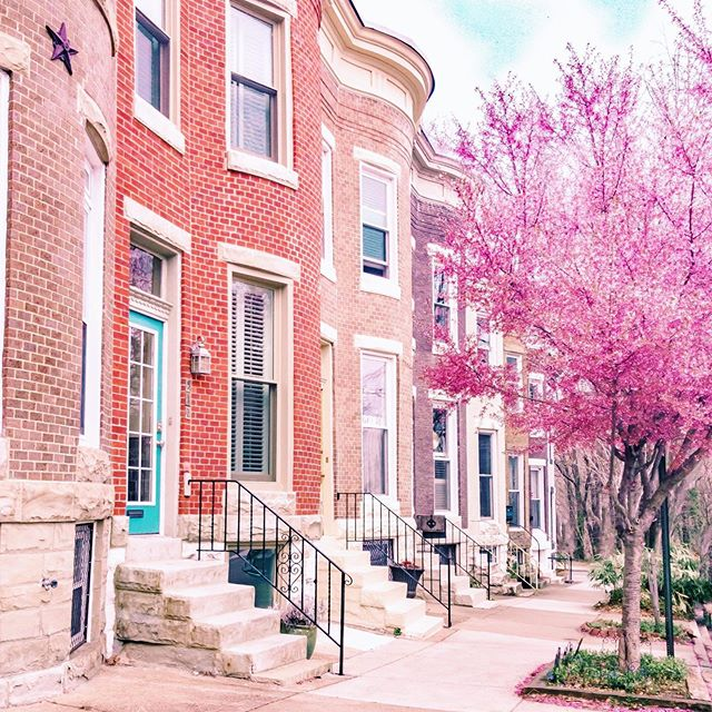 It's a 𝒷𝑒𝒶𝓊𝓉𝒾𝒻𝓊𝓁 day in the neighborhood 🌸🌸🌸 ⠀⠀⠀⠀⠀⠀⠀⠀⠀ One of the most charming things about Charm City are its iconic row houses, made even more beautiful by the blossoming trees. ⠀⠀⠀⠀⠀⠀⠀⠀⠀ Other things I love about my city: it's historic neighborhoods, it's green spaces, the street art, a thriving independent business scene, and of course…crab cakes! (the best I've tried are at @kocos_pub) 🦀 ⠀⠀⠀⠀⠀⠀⠀⠀⠀ Have you been to Baltimore? And if you're familiar with the city already, what are some of your favorite things about it? • • • • • • • #thebmorecreatives #baltimore #charmcity #bmoreart #bmoreblogger #hampdenbaltimore #baltimoreblogger #alliemarietravels #locallove #baltimorecity #rowhouse #spring #bloom #theprettycities #thetravelwomen #mycity #urbanexpoloration #ladiesgoneglobal #girldiscoverers #thefairytalebloggers #pinktrotters #sheisnotlost #discoverunder5k #openmyworld #dmv #maryland #visitmaryland #visitbmore #pink