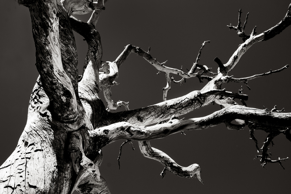 TWISTED TREE 01 • • • SHOP ART • • •