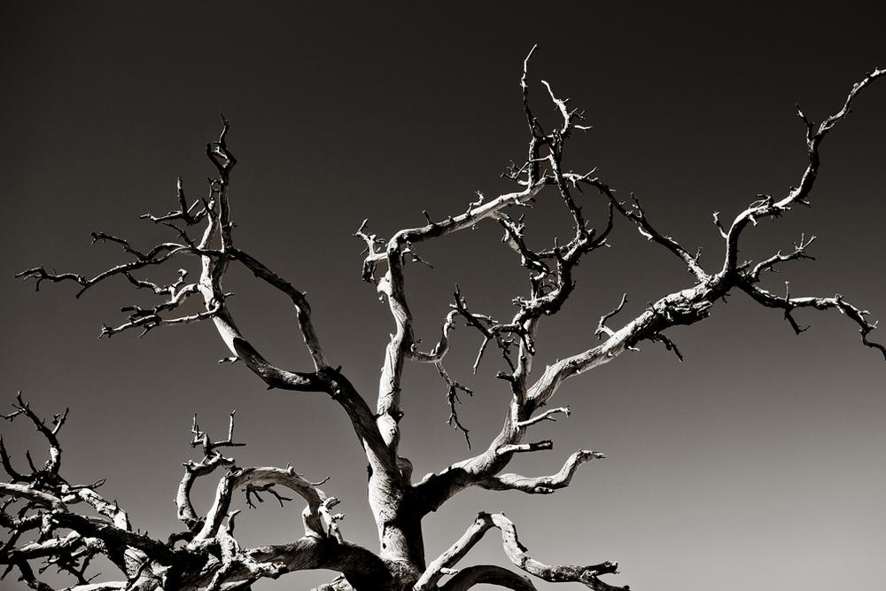 TWISTED TREE 02 • • • SHOP ART • • •