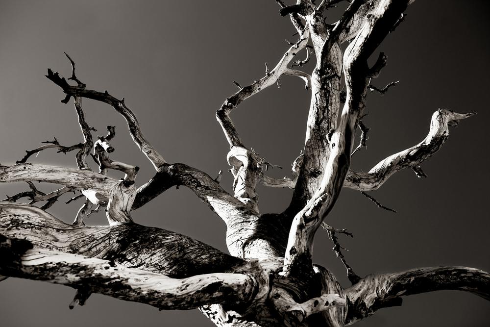 TWISTED TREE 03 • • • SHOP ART • • •