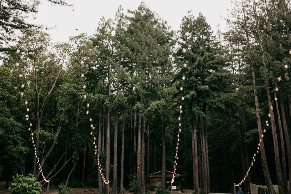 redwoods-wedding-photographer788.jpg