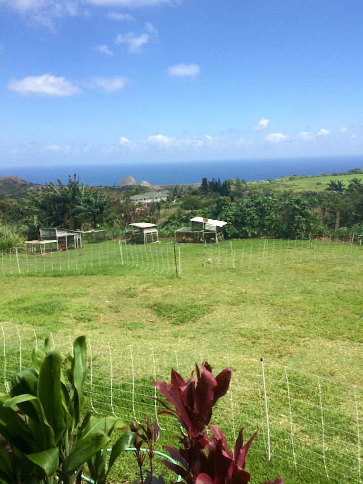 Uncle George's farm in West Maui