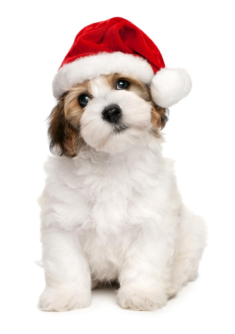 secretsantaguelph_puppy