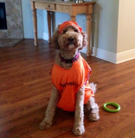 Cute Puppy in a Shirt and We Sponsor a Race! September 24, 2014