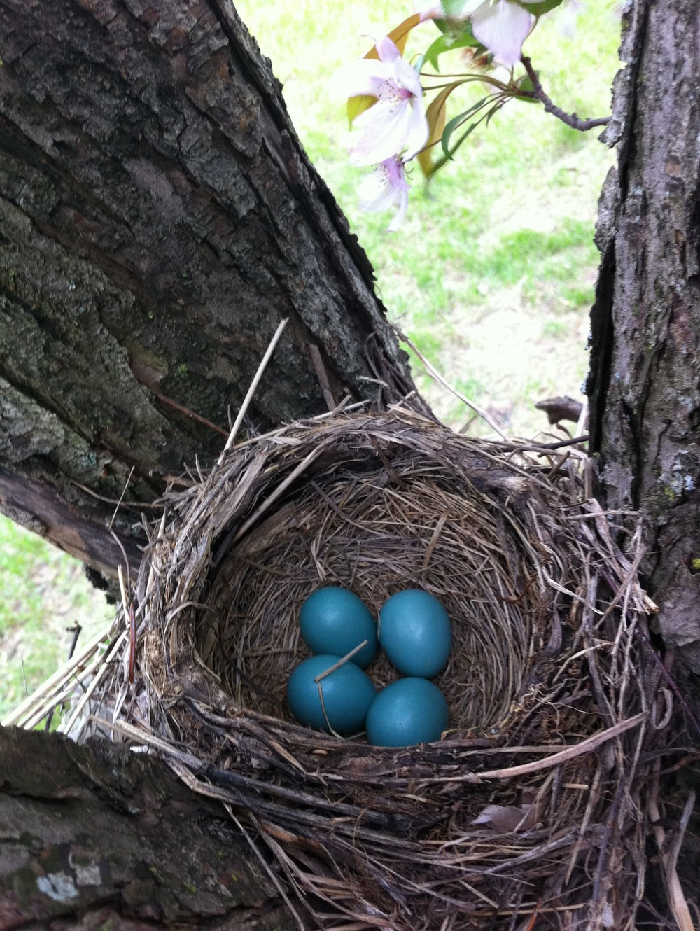 nest-slideshow.jpg